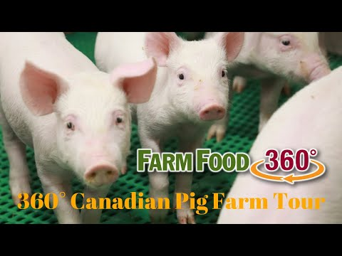 360° Canadian Pig Farm Tour