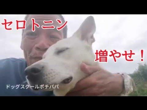 【犬の問題行動解決!】セロトニン