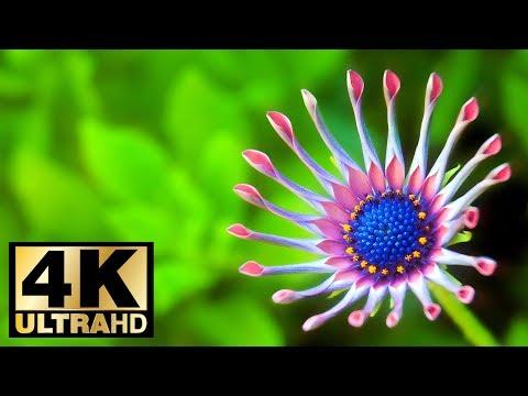 Colorful Flowers 4K UltraHD Slideshow 2018