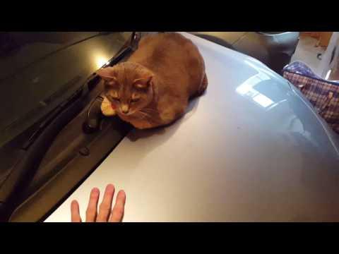 Cat likes me car