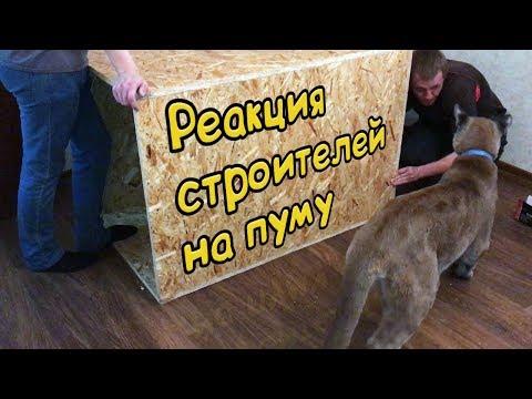 РЕАКЦИЯ СТРОИТЕЛЕЙ НА ПУМУ / Новый дом для Пумыча