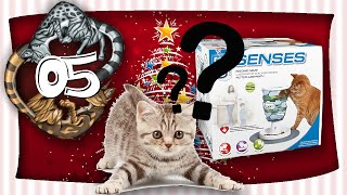 Schlaue Katze - Miauender Adventskalender - Tag 05 - mit Miri
