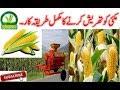 Maize/Makai thresh in Pakistan and India / MAIZE DEHUSKER / MAKKA THRESHER,Agriculture technology