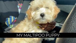 I GOT A MALTIPOO PUPPY! | First 2 Weeks With Her