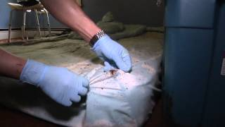 Heavy Bed Bug Infestation in a Single-family Home