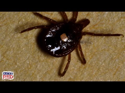 Why Meat Lovers Should Fear the Lone Star Tick