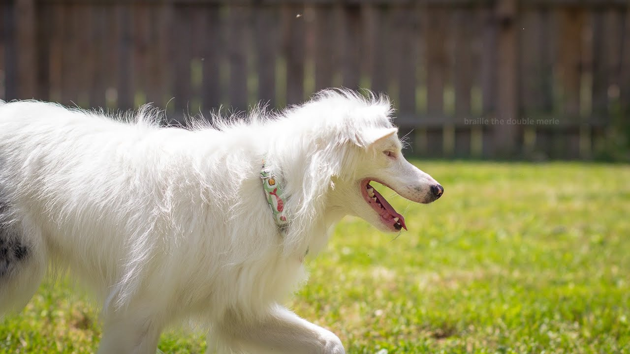 Best Training Collar For Deaf Dog