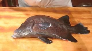《ヒゲダイ(髭鯛)の捌き【1】》・・・・大和の 和の料理《捌き》