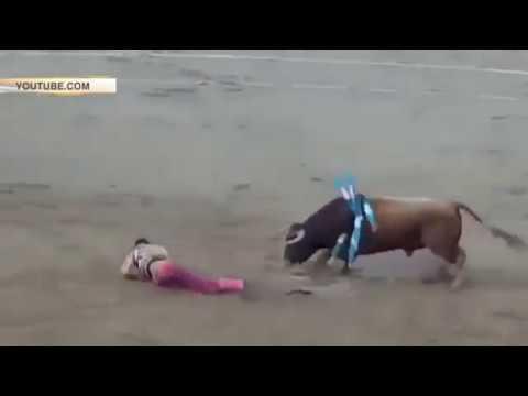 Вопрос: Почему бык на корриде атакует не матадора, а красный плащ?