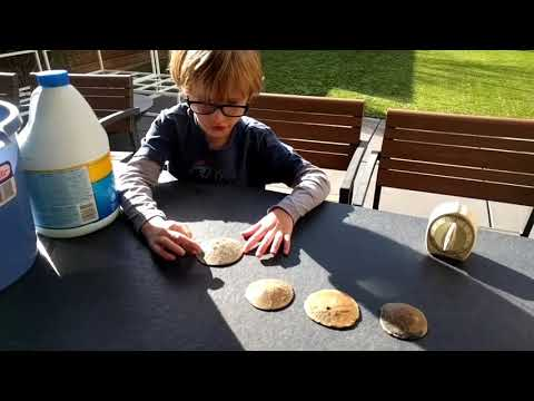 How To Clean Sand Dollars From The Beach