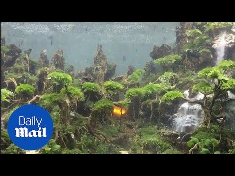 Artist builds forest and underwater waterfall in a fish tank - Daily Mail