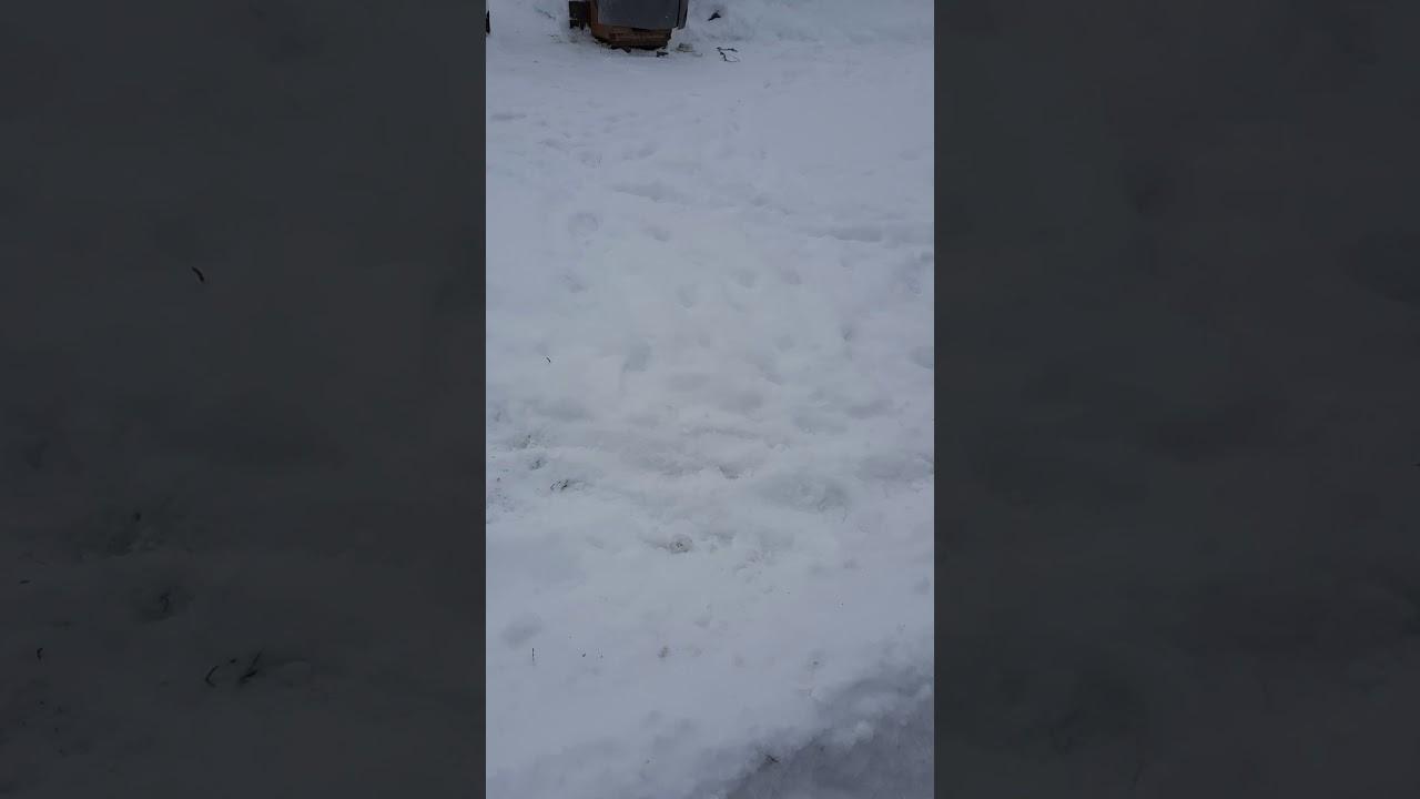 Мой огород, снега много 2020