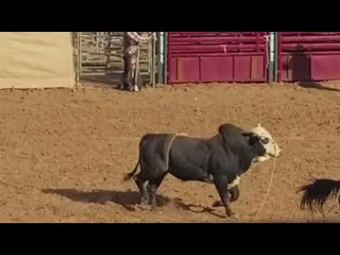 Arizona State Fair all Indian rodeo 10/21/17
