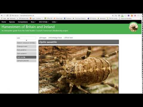 Harvestmen of Britain and Ireland - an interactive guide