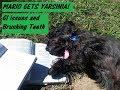 MY DOG AND YARSINIA BACTERIA. BEWARE