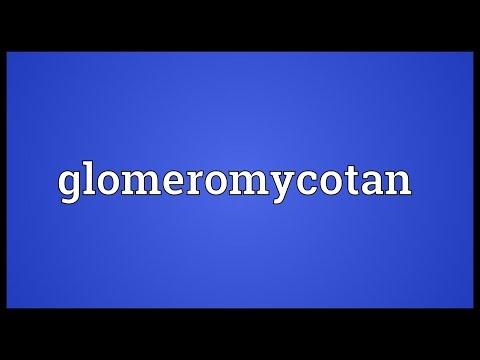 Glomeromycotan Meaning