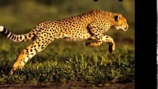 Dünyanın Yaşayan En Hızlı 10 Hayvanı 2