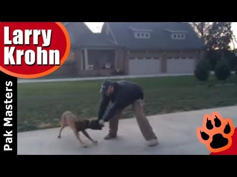 Hard biting Belgian Malinois / Playing Tug with Your Dog