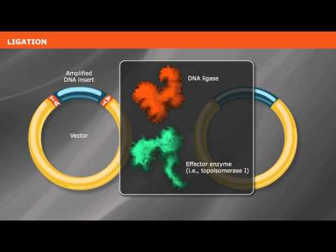 Overview of PCR Cloning