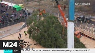 Главную новогоднюю елку страны доставили в Московский Кремль - Москва 24