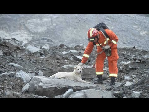 Sichuan landslide: One dog captures the mood and hearts of a nation