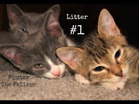 Kitten UnBoxing #1 So Cute & Playful! Foster Litter #1 ~ Flashback to June 2014!