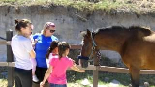 Progetto Equitazione: Quattro Zampe ed un pungiglione