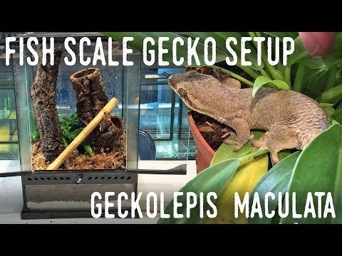 DIY ARBOREAL GECKO SETUP: Giant Fish Scale Gecko Vivarium!
