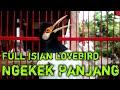 Masteran Jalak Suren Gacor Mompa Garuda Full Isian Lovebird Durasi Panjang Suara Jernih  Mp3 - Mp4 Download
