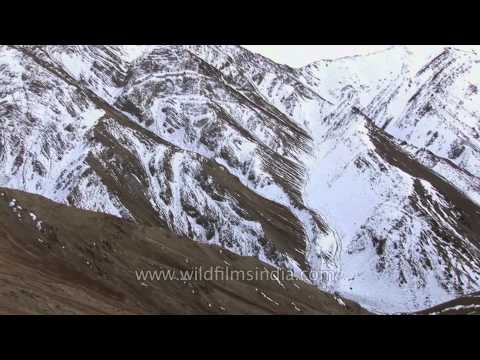 Foreigners look for Snow Leopard in Ladakh's mountains