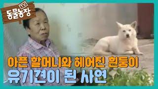 TV동물농장 587회 #4