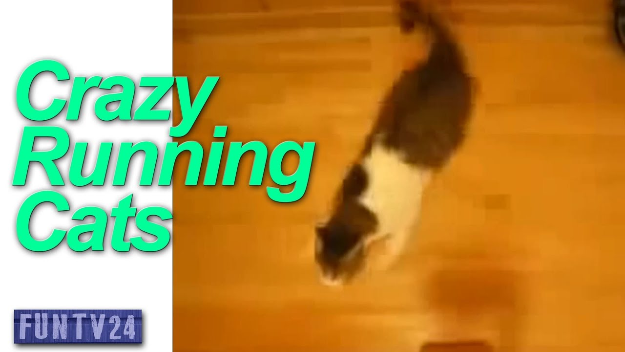 Cat Running Around Like Crazy