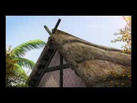 Monyet Vs Harimau Lucu Youtube