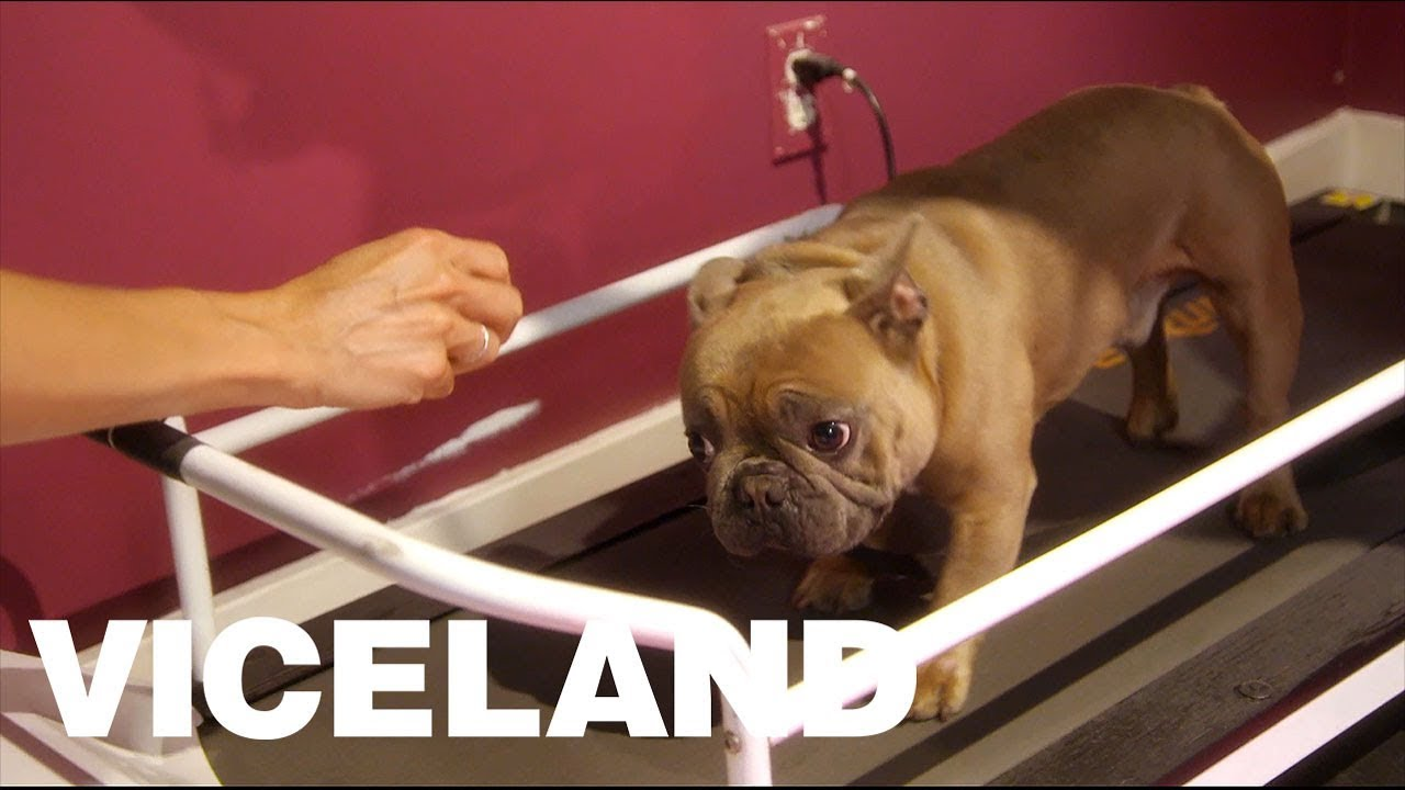 Trappy S Doggie Treadmill Youtube
