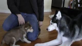 Laika meets Mishka & Moki!