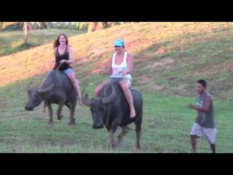 Racing Water Buffaloes in the Philippines