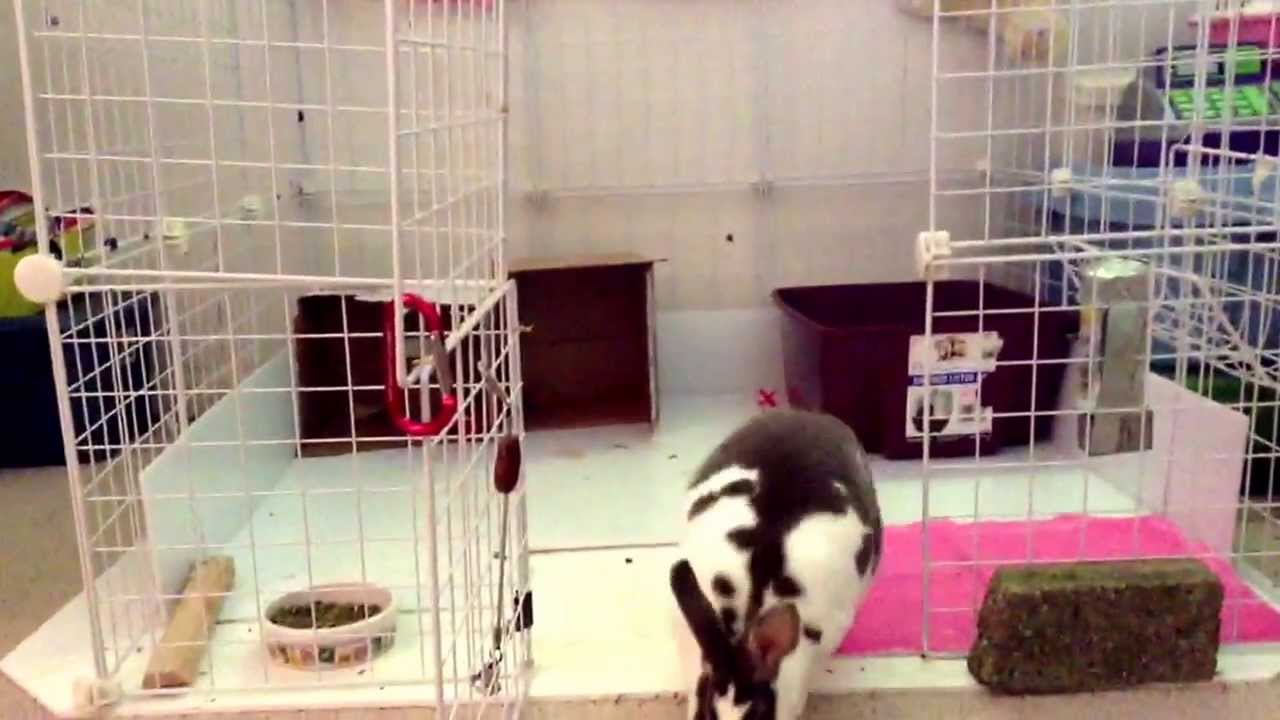 Bailey my bunny and her c c cage youtube for Making a c c cage
