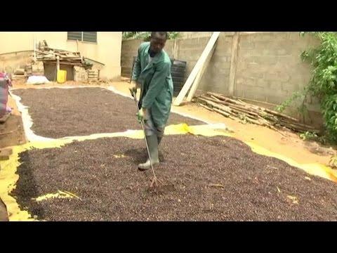 Togo, DÉCOUVERTE DE LA SOCIÉTÉ BIOPRODUCT