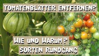 Wie man Tomatenblätter richtig entfernt - und warum.