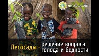Лесосады - решение проблем голода и бедности.