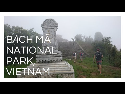 EVERYTHING WANTS TO KILL YOU in Bạch Mã National Park, Vietnam