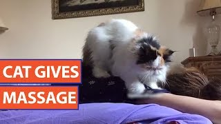 Cat Gives Massage Video 2017 | Daily Heart Beat