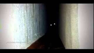 Фильм ужасов про кошек 5