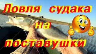 Ловля судака на донную снасть, поставушка / самоловка .Рыбалка  с ночевкой.