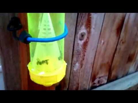 how to build a wasp trap