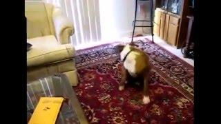Прикольное видео! КОТЫ НЕ ЛЮБЯТ, когда хозяин пукает!  Смешные животные. Funny Animals.