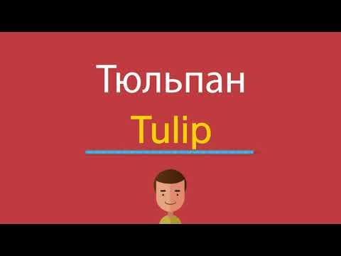 Как по английски будет слово тюльпан