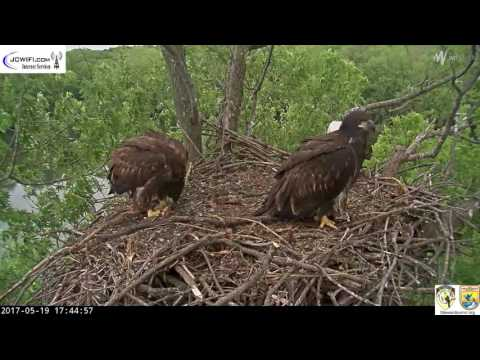 The Trio Eagles - Somebirdy needs a nap,or a time out - 05-19-17