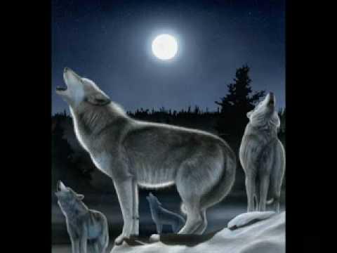 El ultimo ke zierre - Lobo estepario