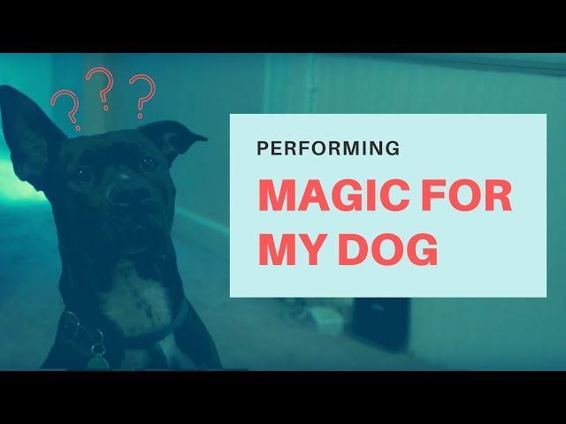 THE MAGICAL DOG WHISPERER - Beyond the Magic ep029